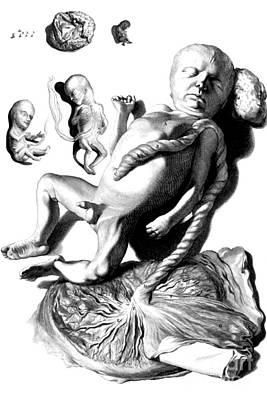 1690 Photograph - Anatomia Humani Corporis, Table 57, 1690 by Science Source