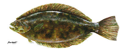 Painting - Anatomical Flounder by Kevin Brant