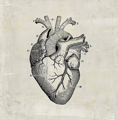 Digital Art - Anatomical Heart Medical Art by Renee Hong