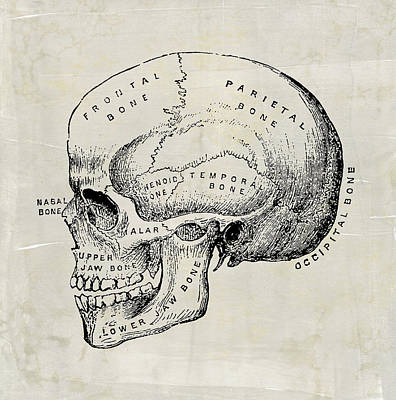 Digital Art - Anatomical Skull Medical Art by Renee Hong