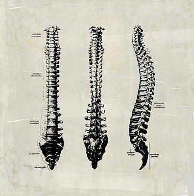 Digital Art - Anatomical Spine Medical Art by Renee Hong