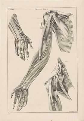 Drawing - Anatomie Van De Arm De Hand En De Schouder Jacob Van Der Schley After Petrus Camper 1762 by R Muirhead Art