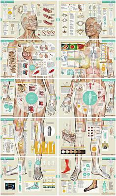 Photograph - Anatomy Chart by Doc Braham
