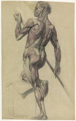 Drawing - Anatomy Muscles Of Human by R Muirhead Art