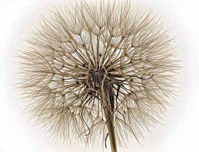 Salsify Wall Art - Photograph - Anatomy Of A Weed Sepia by Steve Harrington