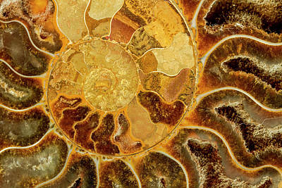 Photograph - Ancient Ammonite by Teri Virbickis