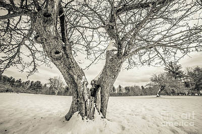Photograph - Ancient Apple Trees In Winter by Edward Fielding