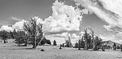 Ancient Bristlecone Pine Forest Panorama Art Print by Jamie Pham