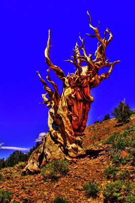 Photograph - Ancient Bristlecone Pine by Roger Passman