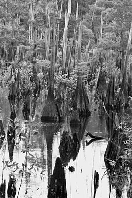 Cypress Swamp Photograph - Ancient Cypress II by Toni Hopper