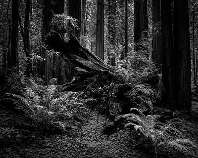 Photograph - Ancient Forest Black And White by TL Mair