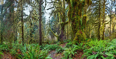Olympic National Park Photograph - Ancient Forest Panorama by Jamie Pham