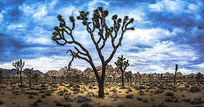 Photograph - Ancient Joshua Tree by Casey Kiernan