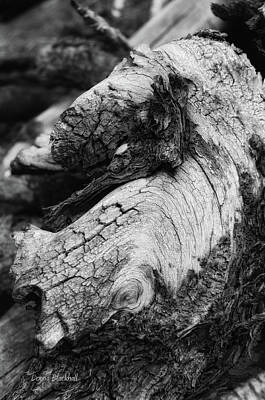 Bleached Tree Photograph - Ancient Knight's Stead by Donna Blackhall