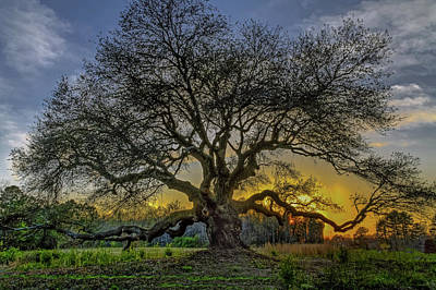 Photograph - Ancient Live Oak Tree by Jerry Gammon