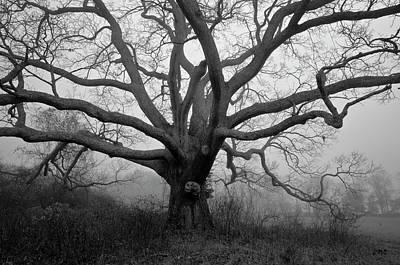 Photograph - Ancient Oak Tree V - Sheep Pasture by David Gordon