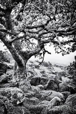Photograph - Ancient Oak Wistman's Wood by Tim Gainey