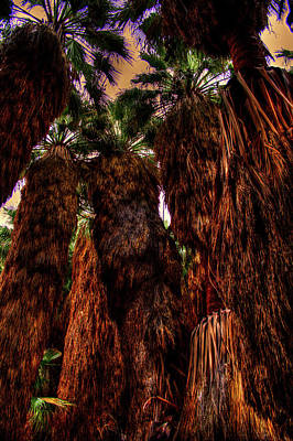 Photograph - Ancient Palms At Thousand Palms Preserve by Roger Passman