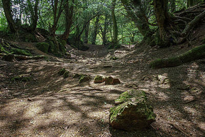 Photograph - Ancient Pathway by Christopher Rees