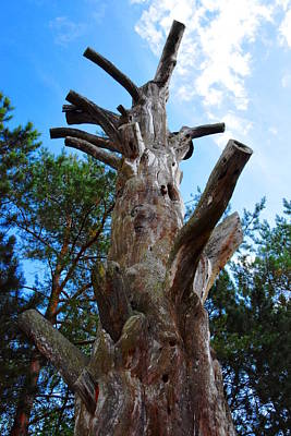 Gaugin Rights Managed Images - Ancient Pine Tree Royalty-Free Image by HelenaP Art
