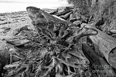 Photograph - Ancient Roots by John  Mitchell