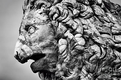 Stone Photograph - Ancient Sculpture Of The Medici Lion. Florence, Italy by Michal Bednarek
