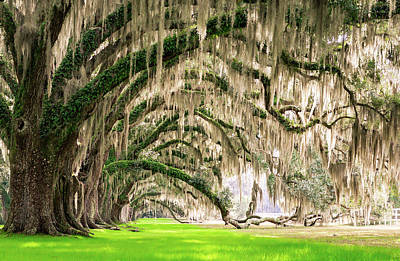Photograph - Ancient Southern Oaks by Serge Skiba