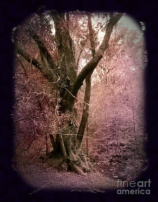 Photograph - Ancient Tree By A Stream by Laura Iverson