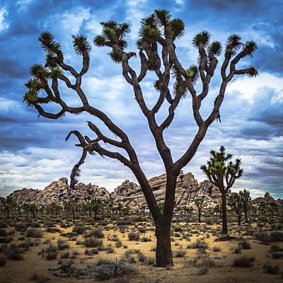 Joshua Tree Photograph - Ancient Tree  by Casey Kiernan