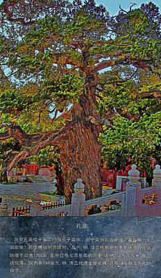 Ancient Tree. Confucian Temple. Original by Andy Za