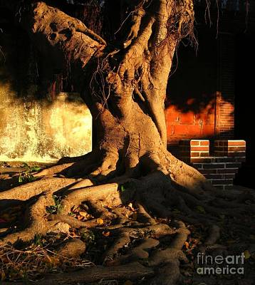 Ancient Tree In A Chinese Courtyard Art Print by Yali Shi