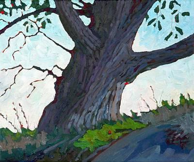 Ancient White Oak Original
