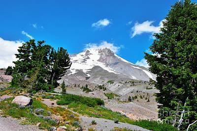 Whitebark Pines Photograph - Mt Hood Oregon - Summertime by Scott Cameron