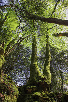Photograph - Ancient Woodland by Christopher Rees