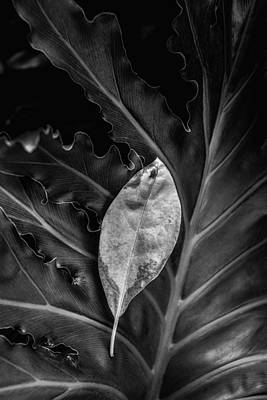 Botany Photograph - And I Will Catch You If You Fall by Tom Mc Nemar