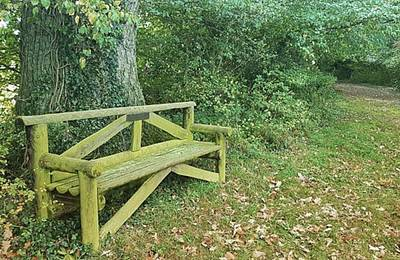 Woodland Photograph - Woodland Seat by Rowena Tutty