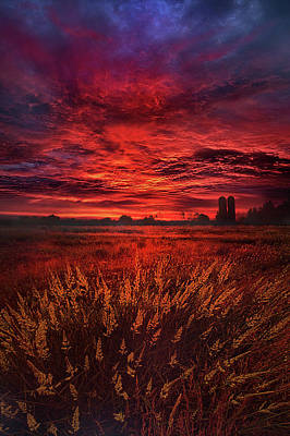 Photograph - And So The Lion Fell In Love With The Lamb by Phil Koch