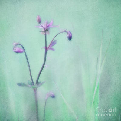 Soft Pastel Photograph - And Spring Came by Priska Wettstein