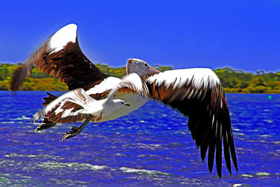 Jervis Photograph - And The Seagull Follows Pelican by Miroslava Jurcik