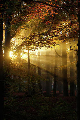 Sun Rays Photograph - And Then There Was Light - Autumn Forest by Roeselien Raimond