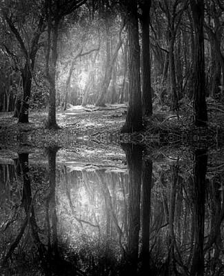 And There Is Light In This Dark Forest Art Print by Tara Turner