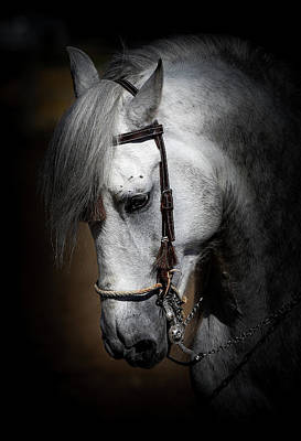 Photograph - Andalusian  by Athena Mckinzie