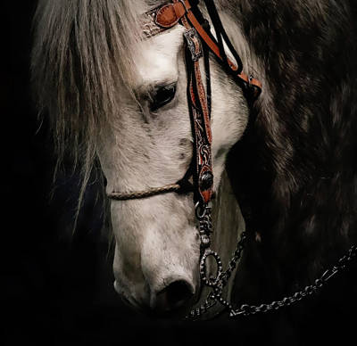 Photograph - Andalusian Beauty by Athena Mckinzie