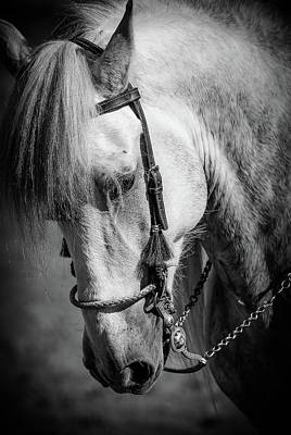 Photograph - Andalusian Bw by Athena Mckinzie