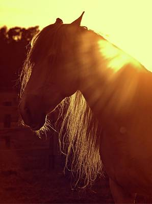 Photograph - Andalusian Flares by Alice Gipson