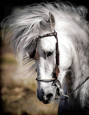 Photograph - Andalusian Hair Flip by Athena Mckinzie