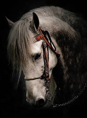 Photograph - Andalusian Horse by Athena Mckinzie