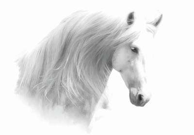 Photograph - Andalusian Horse Bw Portrait by Athena Mckinzie