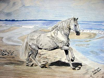 Drawing - Andalusian Horse by Melita Safran