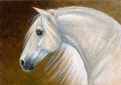 Painting - Andalusian Horse Portrait Miniature by Shari Erickson